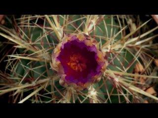 Царство Растений с Дэвидом Аттенборо  BBC  Kingdom of plants 2012 HD 1080