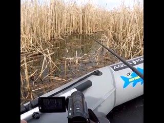 Ловля карася в зарослях камышаУдачная рыбалка 🎣 | Всё о рыбалке