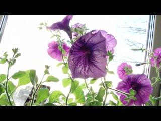 Все больше людей присоединяется к акции «Украсим Родину цветами» Союза садоводов России,