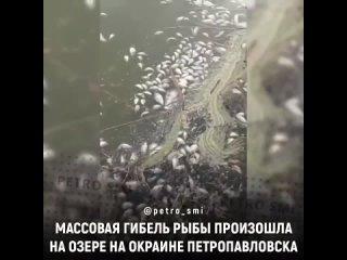 В озере на окраине Петропавловска произошел массовый замор рыбы, передает корреспондент Sputnik Казахстан.⠀ЧП произошло на озе