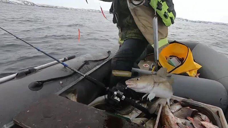 ТЕРИБЕРКА 2021г. Морская рыбалка. Нашли треску у острова Малый Олений.
