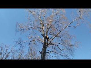 Спил аварийных деревьев на кладбище