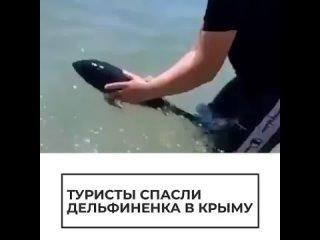 🐬В Севастополе спасли застрявшего на мелководье дельфиненка. Отдыхающие несколько часов придерживали обессиленное животное, по