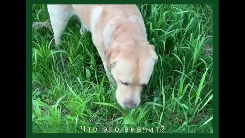 Видео от ИРОО КЦ АМИГО