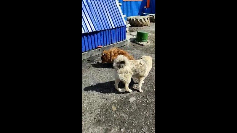 Видео от Приют для бездомных животных Верный г Кемерово