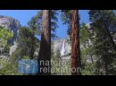 Yosemite Falls Forest Creek 1 HR Pure 4K Nature Video Sounds