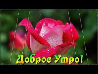 С Добрым Субботним Утром!💌 Всем, кто в сети! Радости и счастья вам с утра и до вечера!  💖🌹🌹🌹