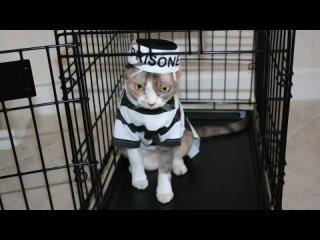Самые необычные законы о кошках в мире