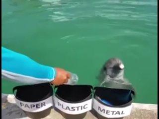 Дельфины самые умные на планете!