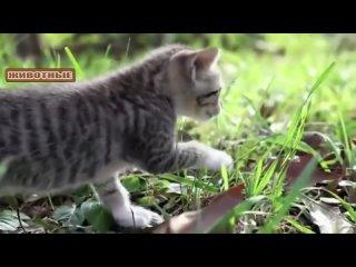 [Самые смешные животные] Котята мяуканье - Сборник. [NEW] 2018