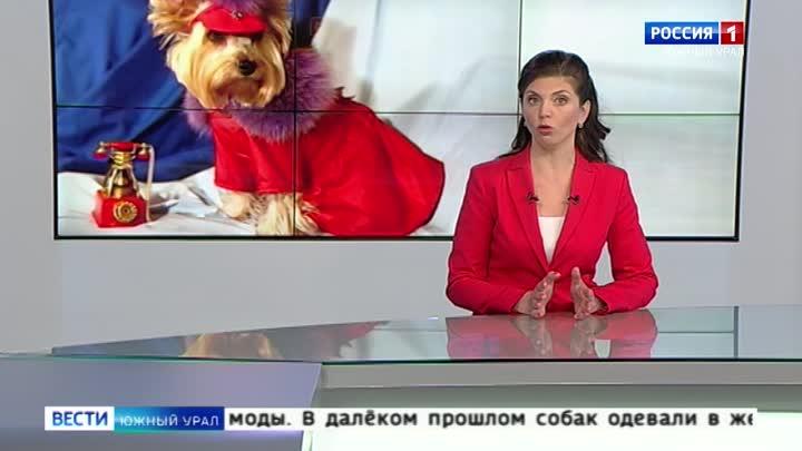 Одежда для собак прихоть или необходимость
