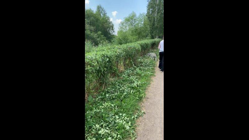 Видео от Алексея Кондратьева