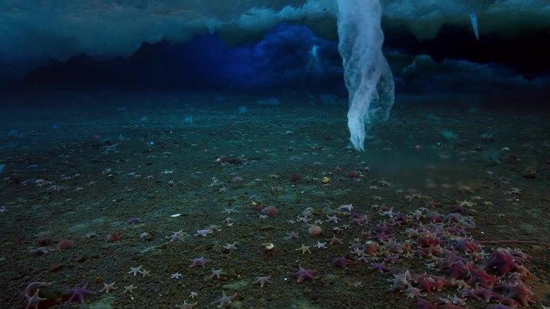 Ледяной палец смeрти брайниклы впервые заснятый на камеру замораживает все на своем пути