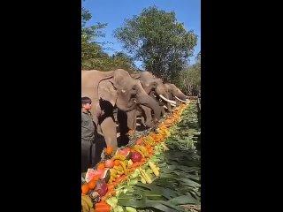 Изобилие вкусов и запахов...Все для вас,дорогие слоники!Наши забавные животные