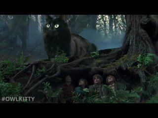 Lord of the Rings + My Cat - YouTube (480p)