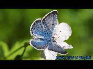 Видео-час интересных и познавательных фактов «ПОРХАЮЩИЕ ЦВЕТЫ», посв. бабочкам