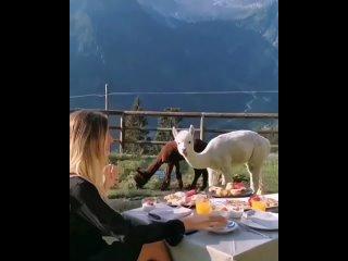 Завтрак с друзьями в Италии ☕️