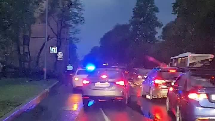На Приморском проспекте собралась длинная пробка из-за упавшего на дорогу дерева.