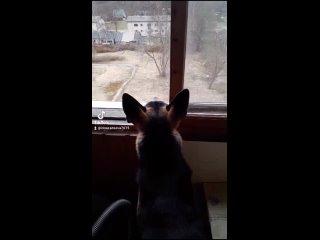 Ох уж, эти соседи.
