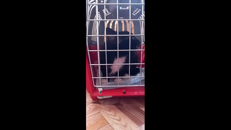 Видео от FORS ANIMALIA