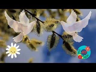Вербное Воскресенье поздравление_ Музыкальная открытка с Вербным Воскресеньем _(240P).mp4