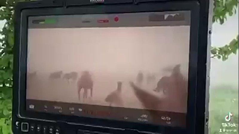Электронный стедик и лошадка