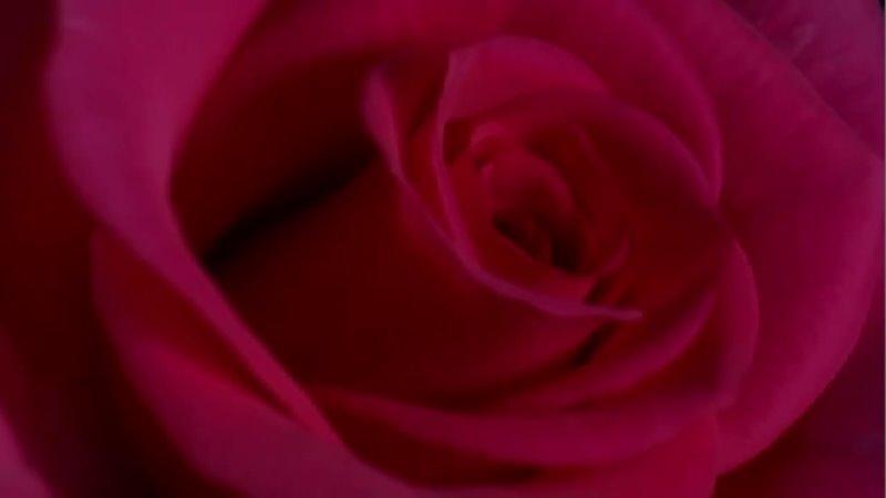 Дороже тебя никого нет на свете текст и вокал В Якшаров музыка Из кинофильмов Вечная музыка minus