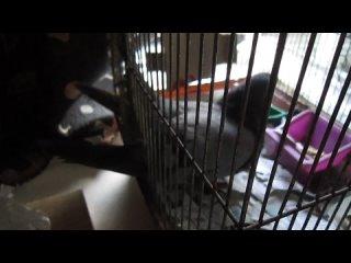 Видео от V h \