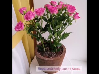 3 D Торт Горшок с розами