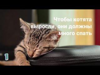 13 интересных фактов о домашних кошках