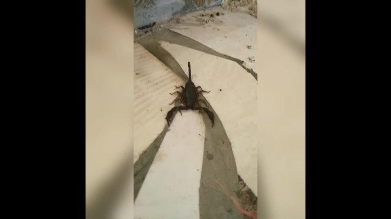 Скорпион в Абхазии заполз в гости