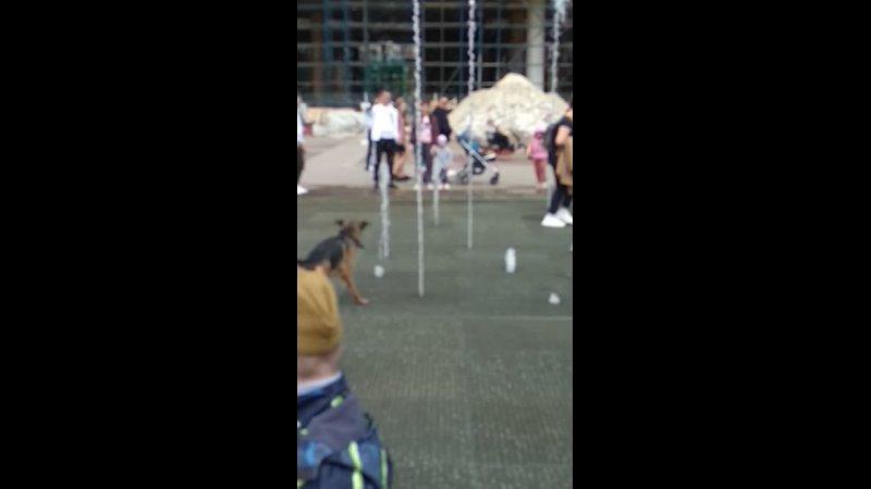 собачка купается в фонтане