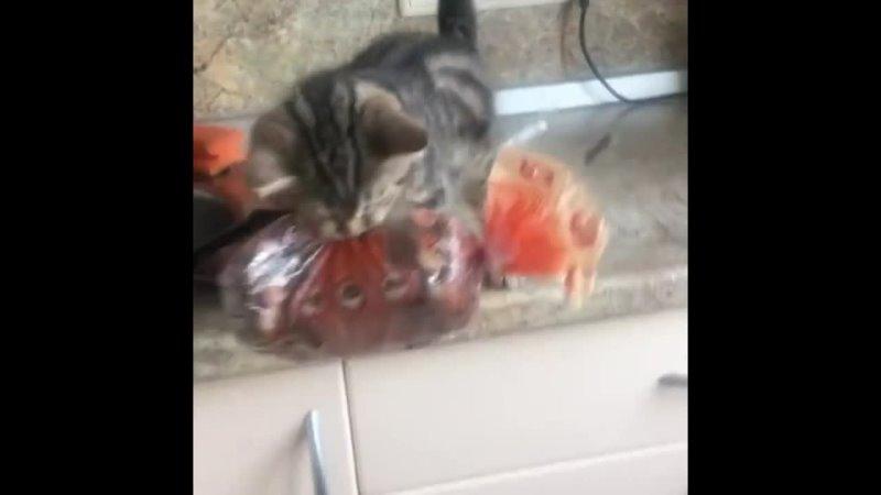 Умный котяра растет