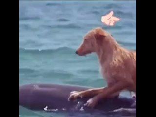 Люди! Учитесь у животных! Они умнее нас