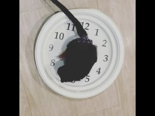 Хранитель времени
