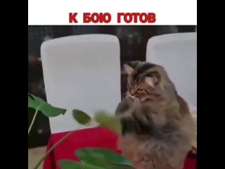 Бой кота с листком (Мемарик,Приколы, mem, new, юмор, vine, мемы, новые,треш)