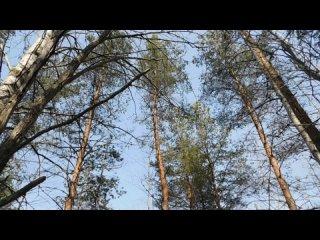 Весна 23 апреля  лес 040