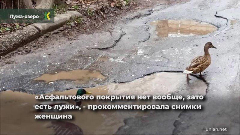 Во Львове лужа на разбитой дороге превратилась в настоящее озеро там поселились утки