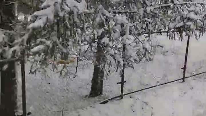 За Ропшей зима и скользко..