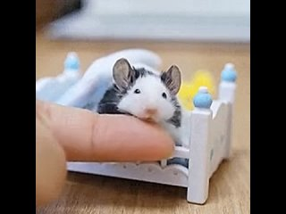 Stroking the mouse