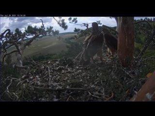 Солнечный орёл в Татарстане — Айдар недоволен, что Айгуль не даёт ему отдыхать 29 07 2021