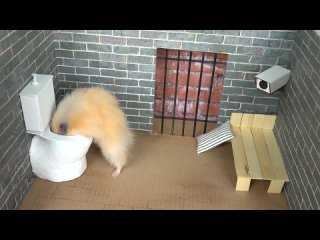 [The Secret Life of my Hamster] 🐹 Hamster escapes the amazing maze! 🐹 Real life traps