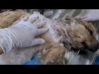 На собаке были тысячи клещей😱, 5 дней она не ела. Спасение бедняги🥺🙏..Media Dump.