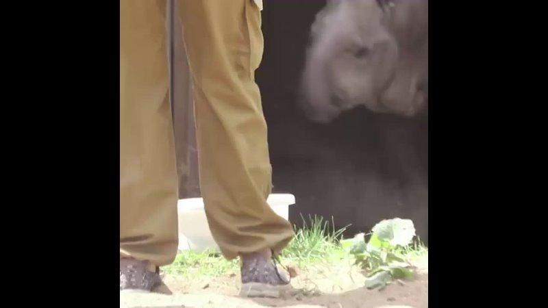 Тапир по имени Сью из Московского зоопарка перебрался в летний вольер