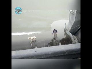 Спасение собаки на дамбе