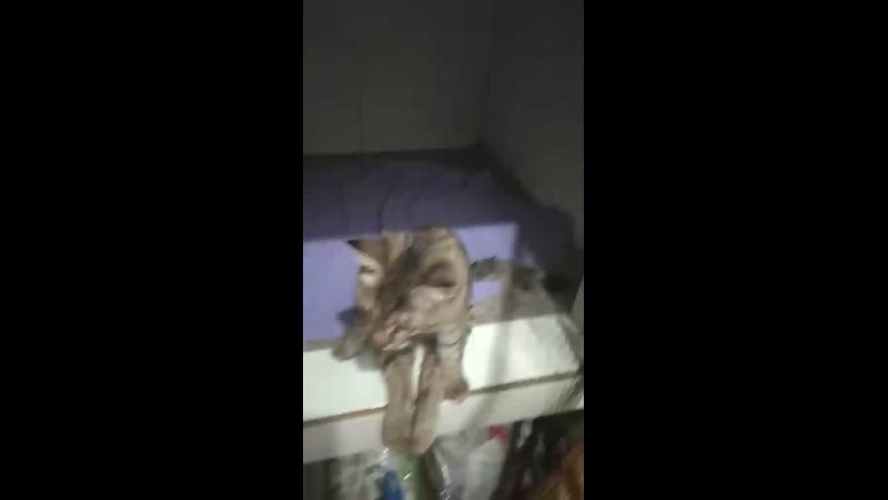 Видео от Новости приюта Кошкин дом г Тольятти