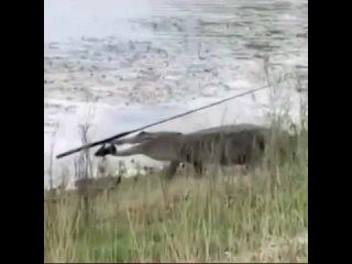 Рыбака сожрал, а спиннинг чебурашке понёс...