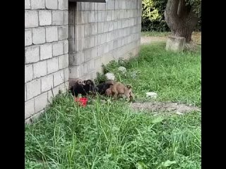 Видео от НБ - Новопавловские Будни