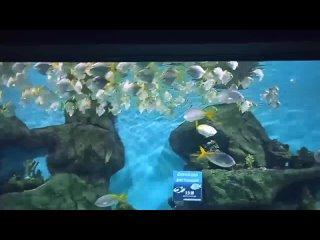 Рыбы танцуютОкеанариум