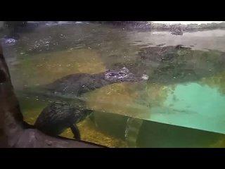 КрокодилОкеанариум
